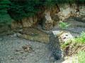 砂防関係施設の長寿命化計画