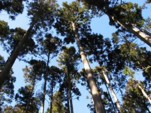 間伐管理された樹林地(粗密度)