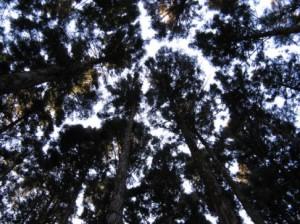 間伐管理されていない樹林地(高密度)