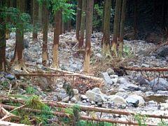 流木化の恐れがある渓床林